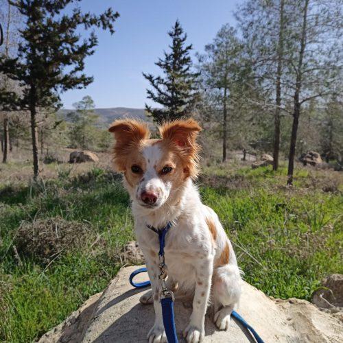 פיסל כלב קטן ועצבני